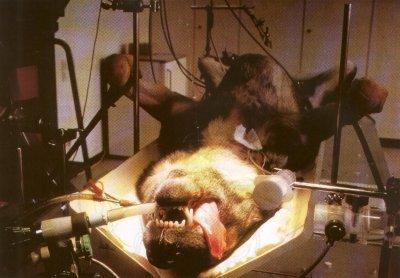 EXPERIMENTACION CON ANIMALES